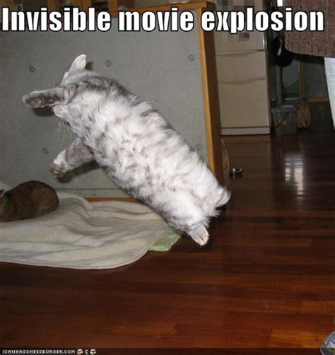 Invisible Cat Memes - the 17 best quot invisible quot cat pictures