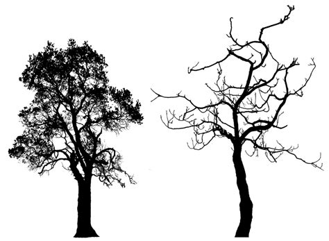 tree silhouette png cliparts co