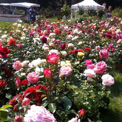 jardines con flores 50 fotos de ideas para decorar plantas y flores para decorar tu jard 237 n mi casa
