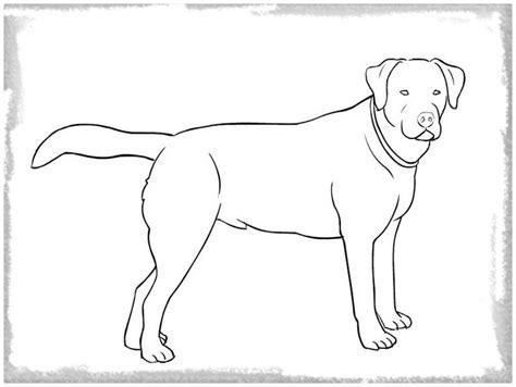 imagenes para colorear un perro imagenes para colorear de perros pitbull archivos