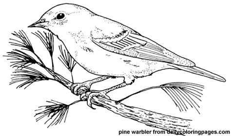 texas bird coloring page texas pine warbler bird coloring pages 7958