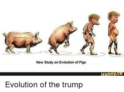 Meme Evolution - new study on evolution of pigs funny evolution of the