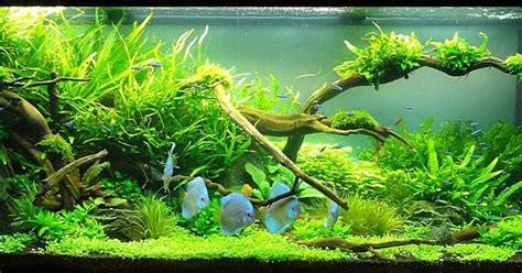 cara membuat aquascape yang simple tips triks simple aquascape
