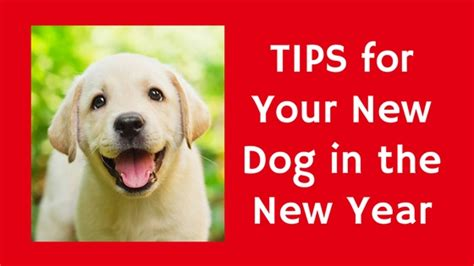 new puppy tips new puppy tips for the new year pawsitive solutions