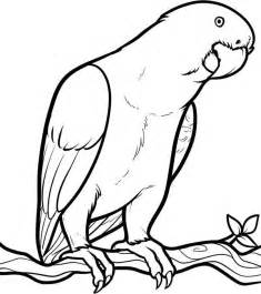 parrot coloring page parrot coloring pages free printable coloring pages