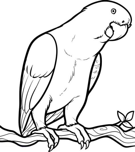 Parrot Coloring Pages Free Printable Coloring Pages Coloring Pages Parrot