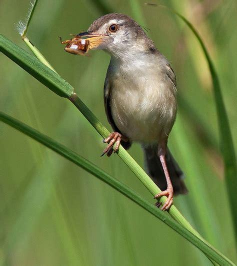 download mp3 adzan dengan cengkok jawa download suara burung ciblek penghuni dumay