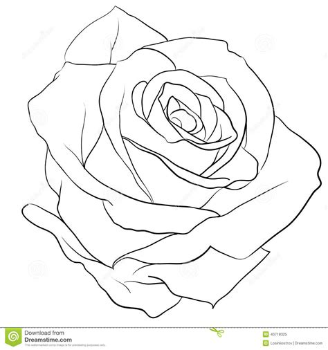outline of rose tattoo outline pencil and in color outline