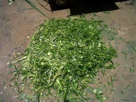 Jual Mesin Pencacah Rumput Bekas hasil mesin multifungsi giling kulit kacang dan cacah