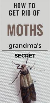 how to get rid of moths s secret