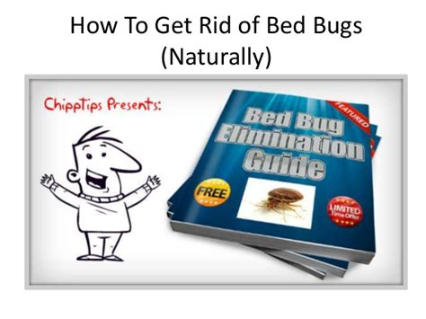 how can you get rid of bed bugs how to get rid of bed bugs naturally learn how to kill