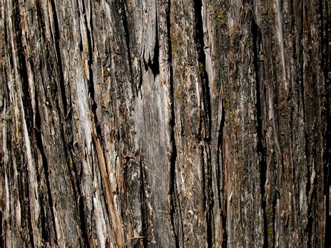 free tree bark nature texture texture l t