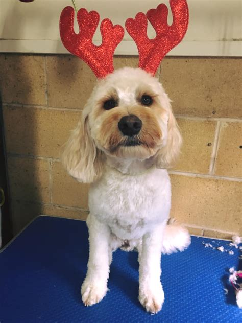 featured christmas dog grooms december  dog grooming canberra scooby friends dog grooming