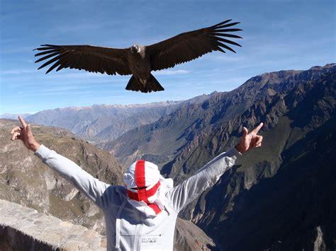 condor burka andes mountainsperu honestly explained