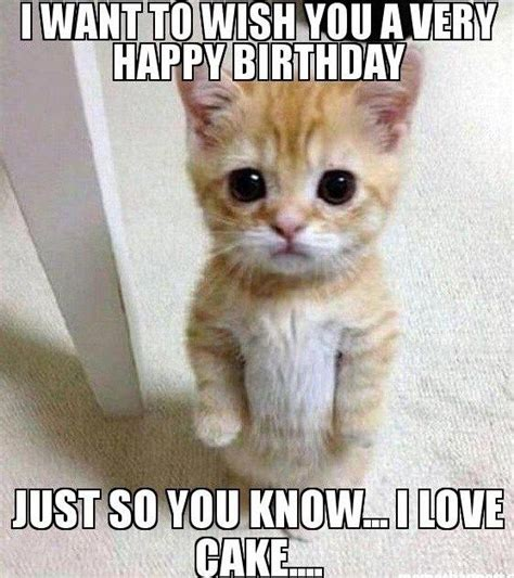 Birthday Cat Meme - the 25 best cat happy birthday meme ideas on pinterest