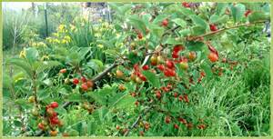 edible forest gardens demystified spiral ridge permaculture