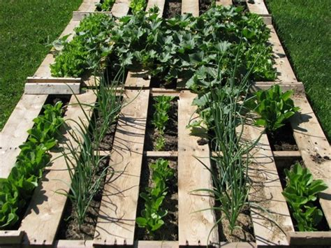Refresh Your Eyes and Mind with Pallet Vegetable Garden