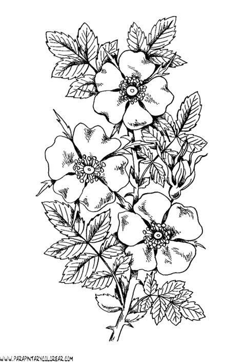 imagenes para pintar de flores flores de dibujos imagui