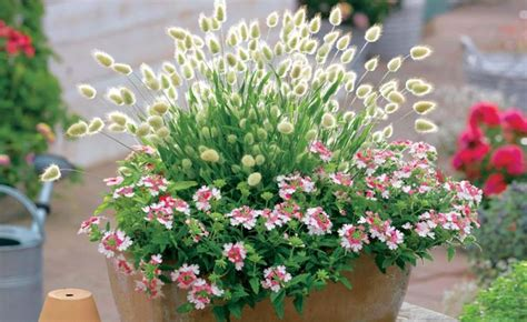 56 best ziergr 228 ser images on grasses plants