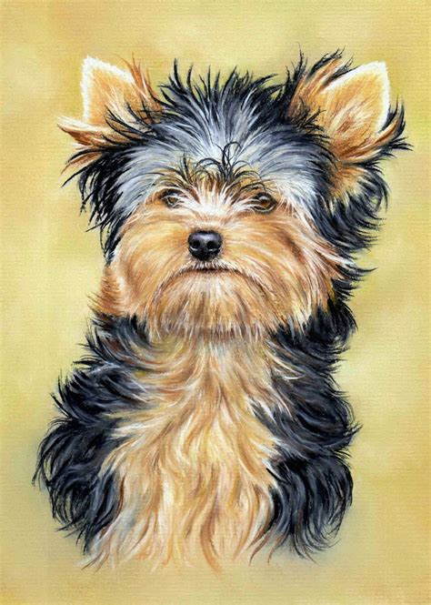 yorkie puppy tips terrier project added colin bradley