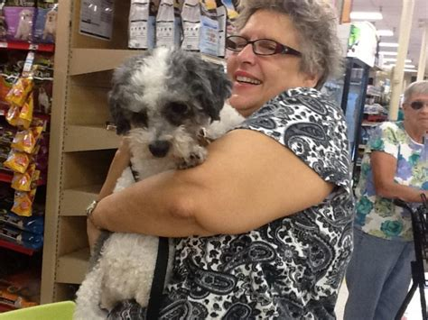 how fast does havanese hair grow zoe s friends animal rescue hooray i m adopted 276 doggies adopted so far