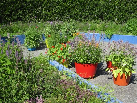 container gardening vegetables and herbs how to grow fruits vegetables and herbs in a container
