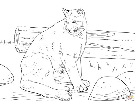 sitting cougar coloring free printable coloring pages