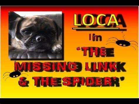 loca the pug is dead loca the pug is dead i m what doovi