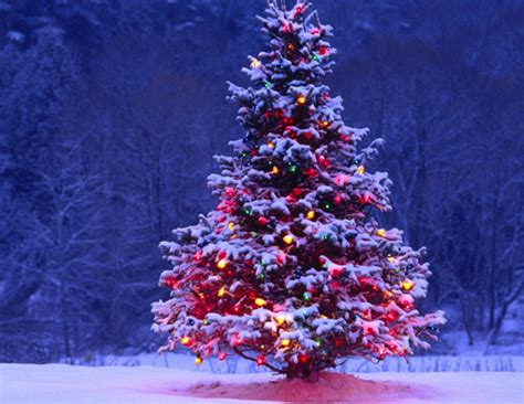 do you know the history and importance of christmas tree