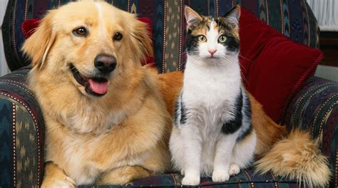 are cats or dogs smarter intelligence for your are dogs or cats smarter