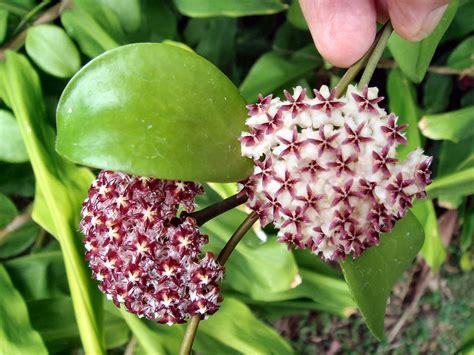 Semua Jenis Mos jenis jenis tanaman hias d pujdainers
