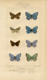 butterfly prints free butterfly printable vintage wall decor the graphics
