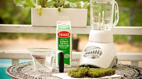 grow moss anywhere