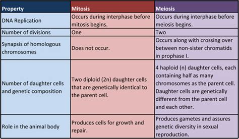 comparing themes quizlet 5th period biology mitosis vs meiosis chart