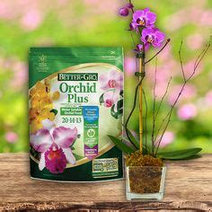 1000 images about better gro orchid plant supplies on pinterest orchid supplies orchid pot
