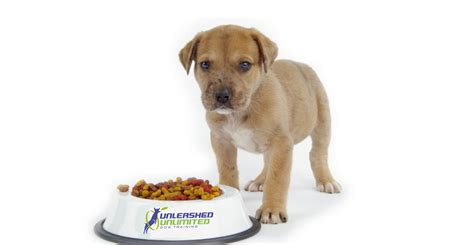 feeding puppies tips on feeding your unleashed unlimited