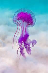 jellyfish colors 25 best ideas about jellyfish on jelly fish