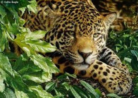 imagenes bonitas de paisajes naturales con animales modernos paisajes hermosos con animales de impacto