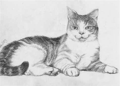 imagenes a lapiz de gatos gato para dibujar a lapiz imagui