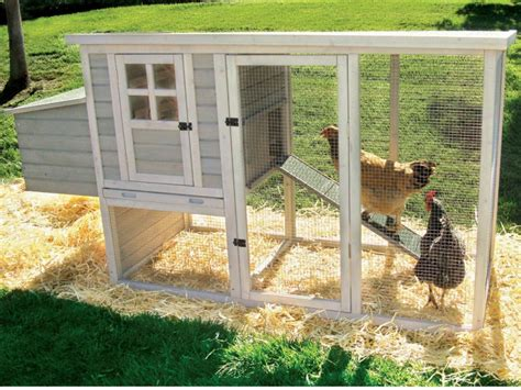 chicken house how to build a chicken coop a step by step guide on how you can build a chicken