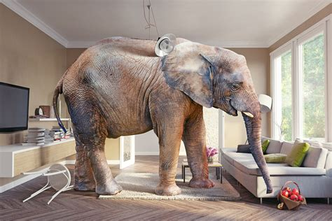 elephants in the living room elephants in the living room conceptstructuresllc com