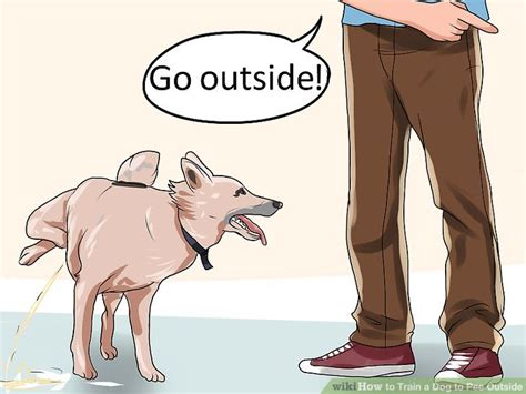 how to train your dog from peeing in the house how to train a dog to pee outside 13 steps with pictures