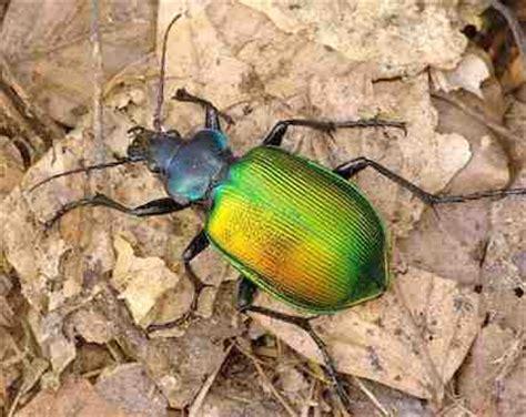 scarafaggi volanti sognare gli scarafaggi interpretazione numeri