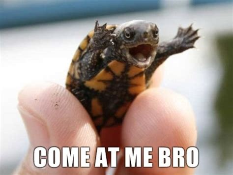 Turtle Meme - redhotpogo come at me bro 5