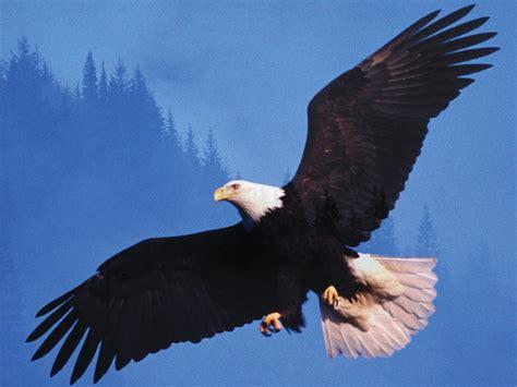 get a bird s eye view tennessee alumnus magazine