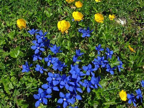 fiori di alta montagna hotel aigle fiori di alta montagna