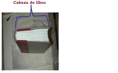 libro de la cabeza a el libro