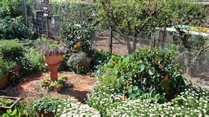 cottage garden nursery brisbane abc garden winners 2014 abc southern queensland
