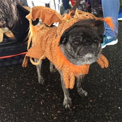 wars pug costume pugs on parade in wars costumes is a thing that happened nerdist
