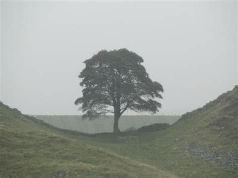 rugged scenery rugged scenery picture of sycamore gap northumberland national park tripadvisor